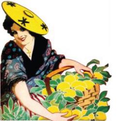 Une Mentonnaise récoltant des citrons de Menton, image traditionnelle de la région depuis des siècles.